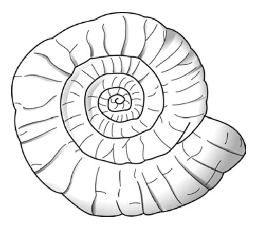 アンモナイトの画像 p1_17